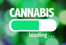 cannabis-social-network