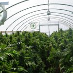 cannabis-warehouse-facility