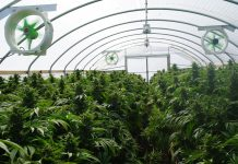 cannabis-warehouse-facility