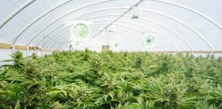 Cannabis Cultivation Acerage