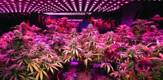 Marijuana Lighting and Heating Technology