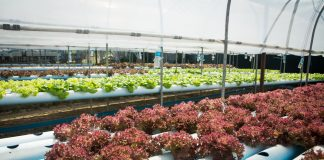 Hydroponics Retail Selection