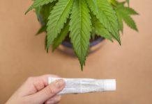 Cannabis Cream Efficacy Test Interest