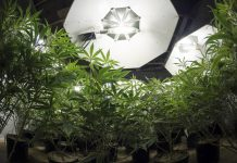 Cannabis LED Lighting Technology