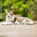 Cat Vet Cancer Treatment Product Updates