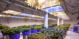 Controlled Environment Systems Medical Marijuana