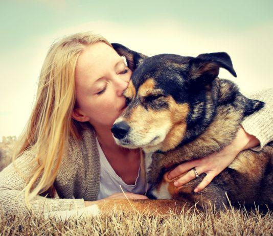 Pet Business Brands Asset Acquisition