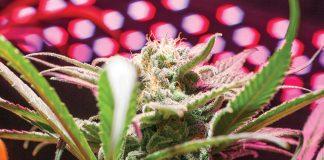 Cannabis Technology Presentation Annual Cannabis World Congress