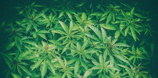 Cannabis CoWorking Space China Joint Venture Talks
