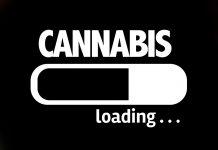 Digital Cannabis Social Platform Updates