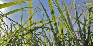Ethanol Plant Purchase Approval US