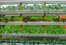 Baltimore Vertical Farming Projects Food