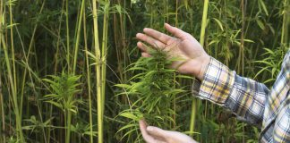 Industrial Hemp Processing Facility Operational First Production