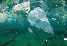 Plastics Sea Landfill Bioplastics Market Opportunity