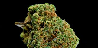 Cannabis Sativa Exclusive Licensing Agreement California