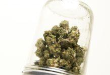 Cannabis Testing Standards CSO