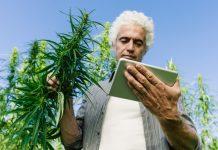 Marijuana Apps Cannabis Bitcoin Payments SinglePoint AppSwarm
