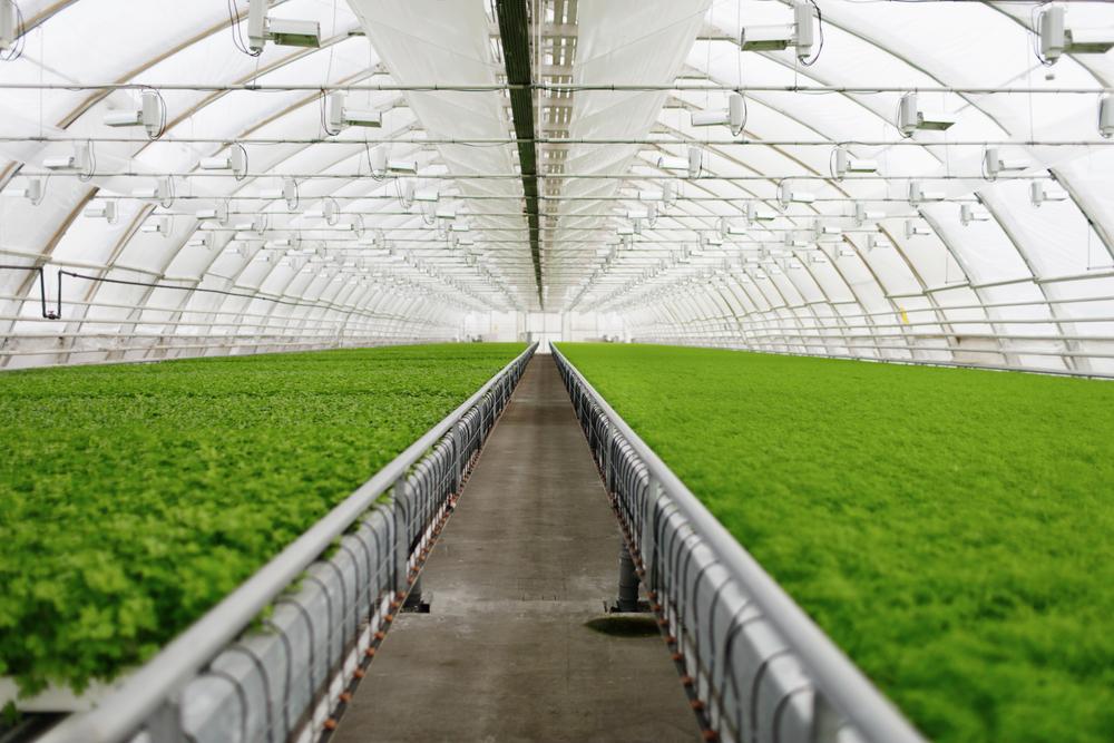 Indoor Harvest Corp (OTCQB: INQD)