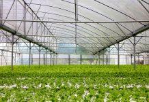 Smart Greenhouse Technology