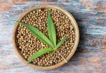 Cannabis Seeds Strains