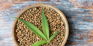 Cannabis Seeds Strains