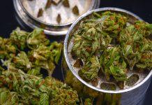 Marijuana Grinder Sales