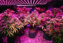 Marijuana Lighting and Heating Technology