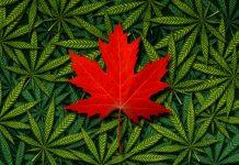 Canadian Medical Marijuana Suit