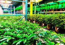 Cannabis Growth Partnership Canada