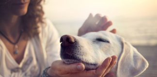 Dog Cancer Treatments Subsidiary
