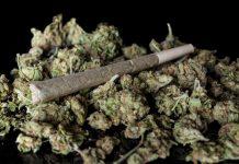Medical Marijuana Canada International Project