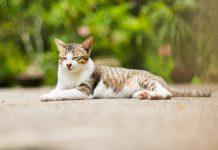 Cat Vet Cancer Treatment Product Updates
