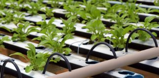 Hydroponics Controlled Environment First Sales