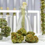 Emerging Growth Biotech / Cannabis Company