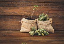 Israeli Cannabis Research Full Patent App US