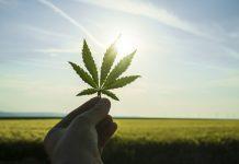 Cannabis Leaf Joint Venture InvestorHub WallStreet Research