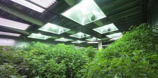 Cannabis Grow House Real Estate Fund