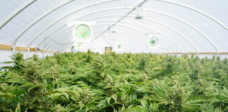 EmergingGrowth.com Cannabis Company - mCig, Inc. (OTC Pink: MCIG) Jumps 18% after Announcing First Hemp Harvest With NYAcres to Begin Soon