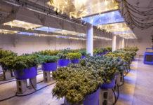 EmergingGrowth.com Cannabis Company - Sugarmade, Inc. (OTCQB: SGMD) up 30%