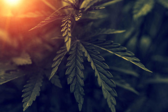 EmergingGrowth.com Cannabis Company - American Diversified Holdings Corp. (OTC Pink: ADHC) up 33%