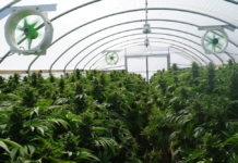 EmergingGrowth.com Cannabis Company - MJ Harvest, Inc. (OTC Pink: MJHI) gains 34%