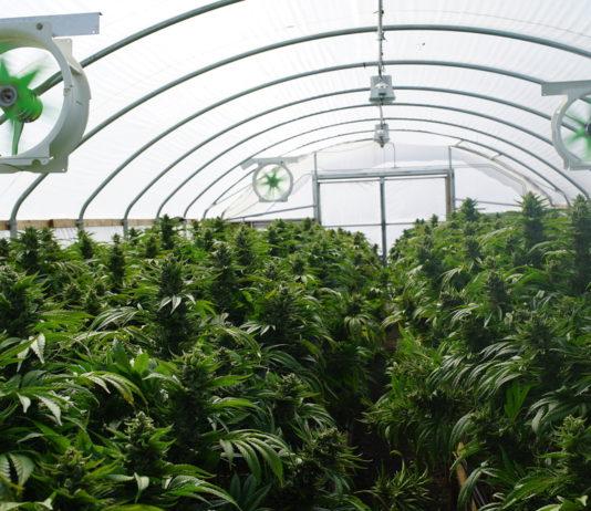 EmergingGrowth.com Cannabis Company - MJ Harvest, Inc. (OTC Pink: MJHI) gains 34%