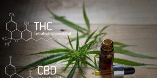 Emerging Growth Cannabis Company