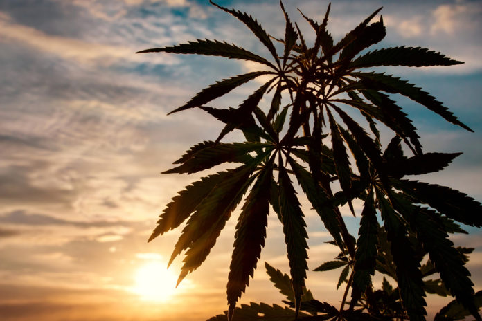 EmergingGrowth.com Cannabis Company - Agritek Holdings, Inc. (OTC Pink: AGTK) gains 60% after Passing of 2018 US Hemp Fam Bill