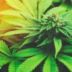 EmergingGrowth.com Cannabis Company - Marijuana Company of America, Inc. (OTCQB: MCOA) gains 48% after Upgrading to the OTCQB