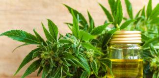 EmergingGrowth.com CBD Company - Green Cures & Botanical Distribution Inc. (OTC Pink: GRCU) gains 30%