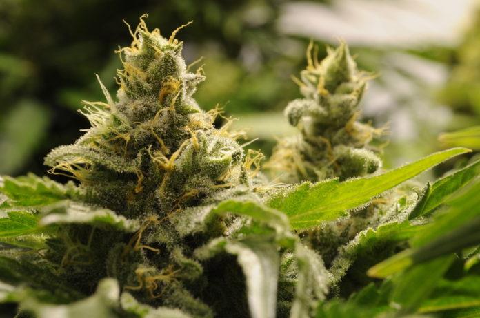 EmergingGrowth.com Cannabis Company - Anything Technologies Media, Inc. (OTC Pink: EXMT) up 55%