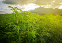 EmergingGrowth.com Cannabis Company - Results-Based Outsourcing Inc. (OTC Pink: RBOS) gains 77%