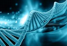 EmergingGrowth.com - Kraig Biocraft Laboratories, Inc. (OTCQB: KBLB) up 26% after Expanding Corporate Board of Directors